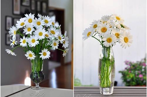 Sử dụng bình cao để cắm hoa cúc